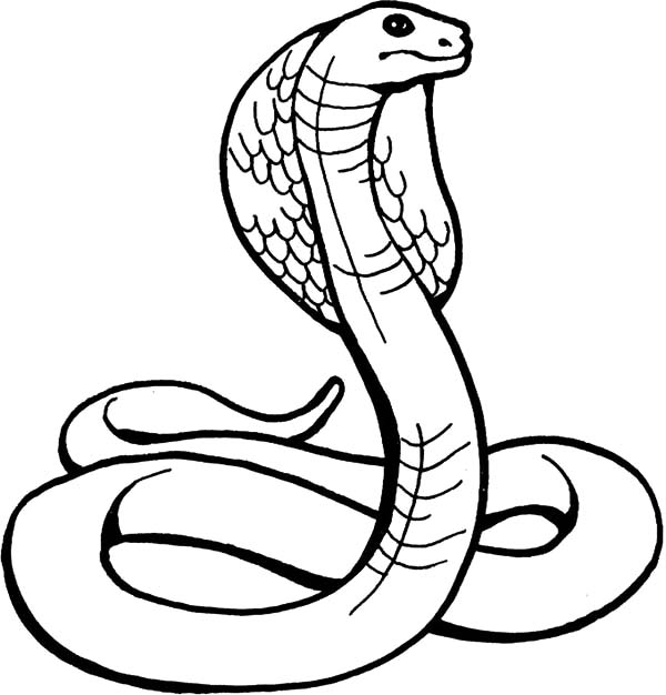 cobra coloring pages wwwimgkidcom the image kid has it