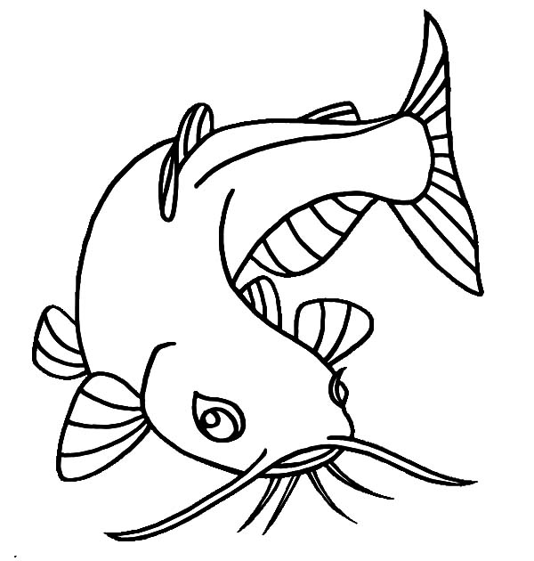 free coloring pages of catfish - photo#4