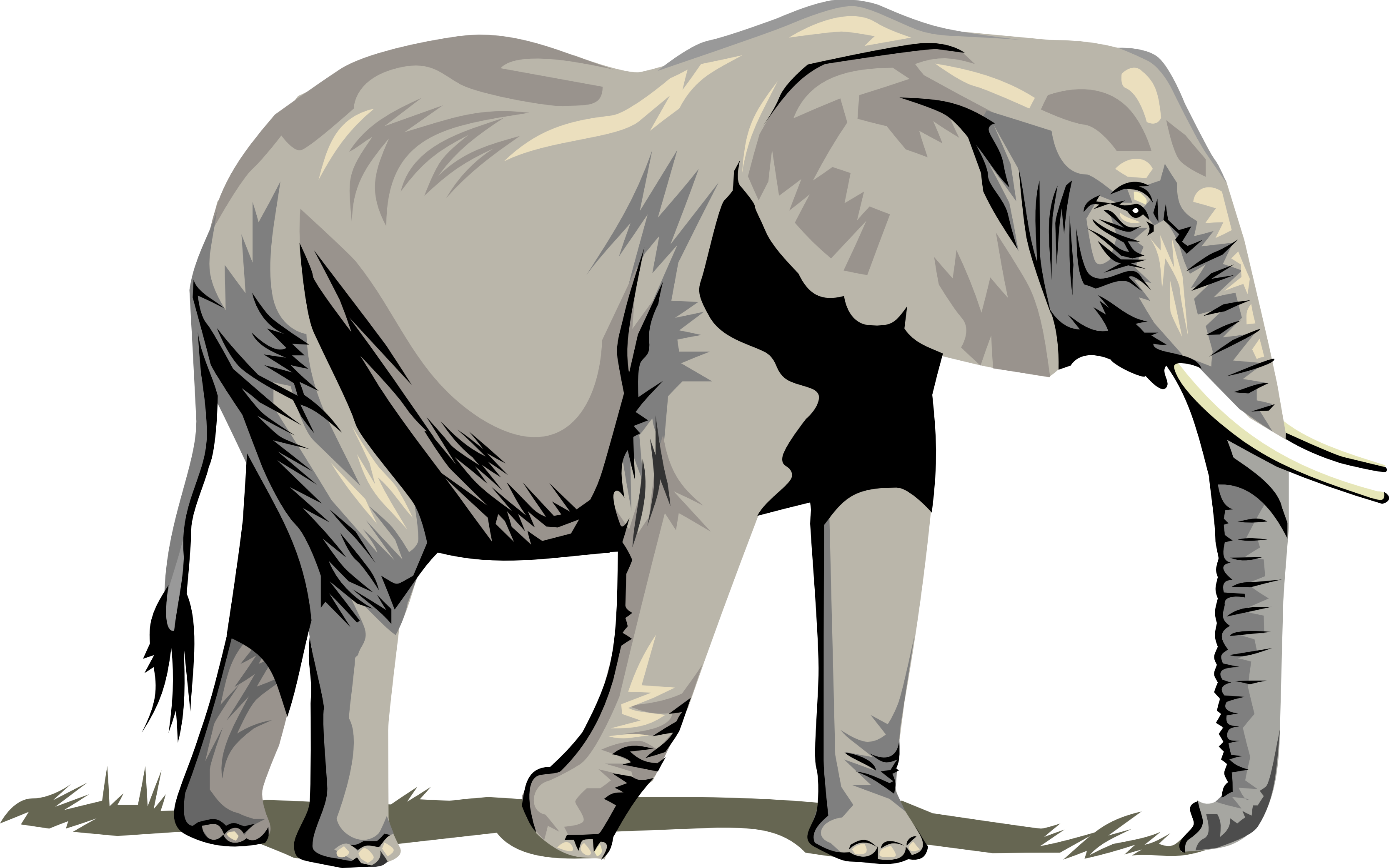 Tusk clipart african elephant  Pencil and in color tusk