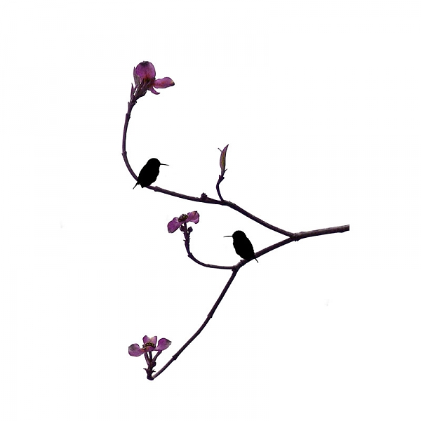 Hummingbird silhouette clipart best for Minimalisme art
