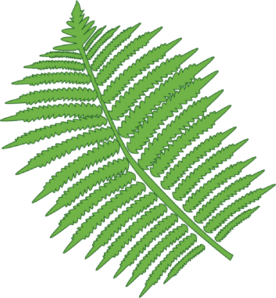 Fern Clipart - ClipArt Best: www.clipartbest.com/fern-clipart