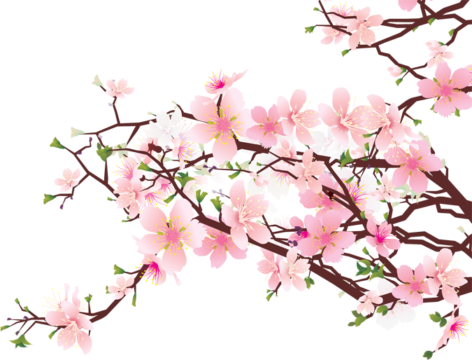 Branches of Cherry Blossoms - ClipArt Best - ClipArt Best