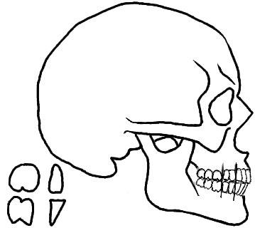 Skull Outline Drawings - ClipArt Best