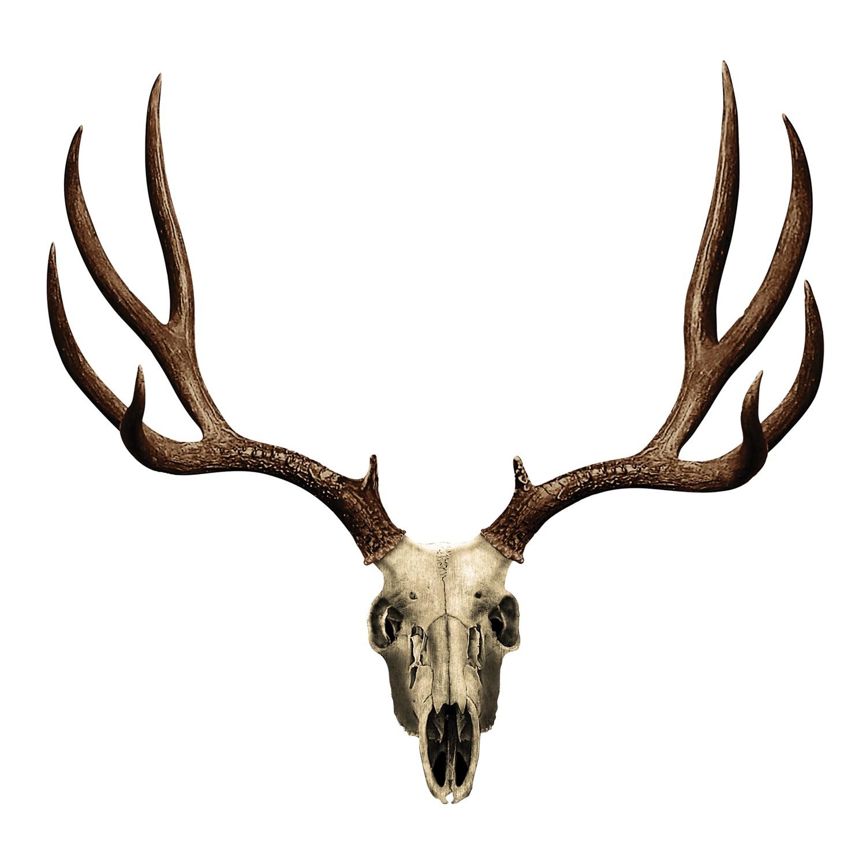 Displaying 17> Images For - Deer Skull Art...