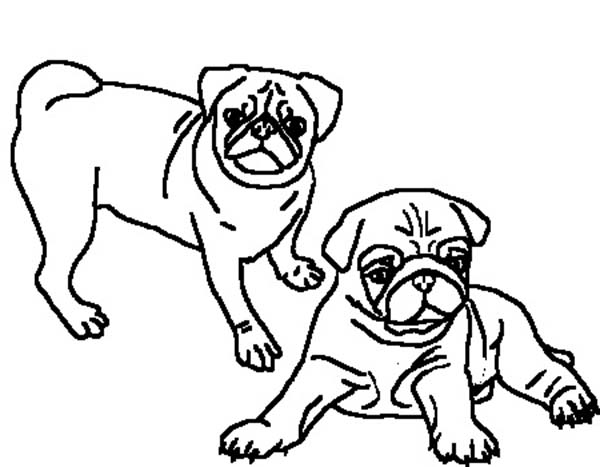 pug coloring pages - photo#27