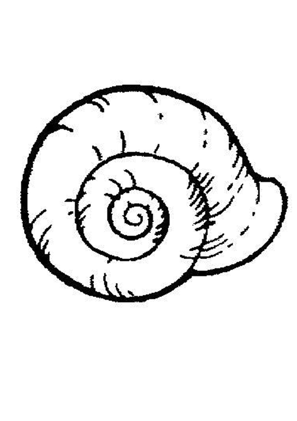 SHELL coloring pages - Sea shell