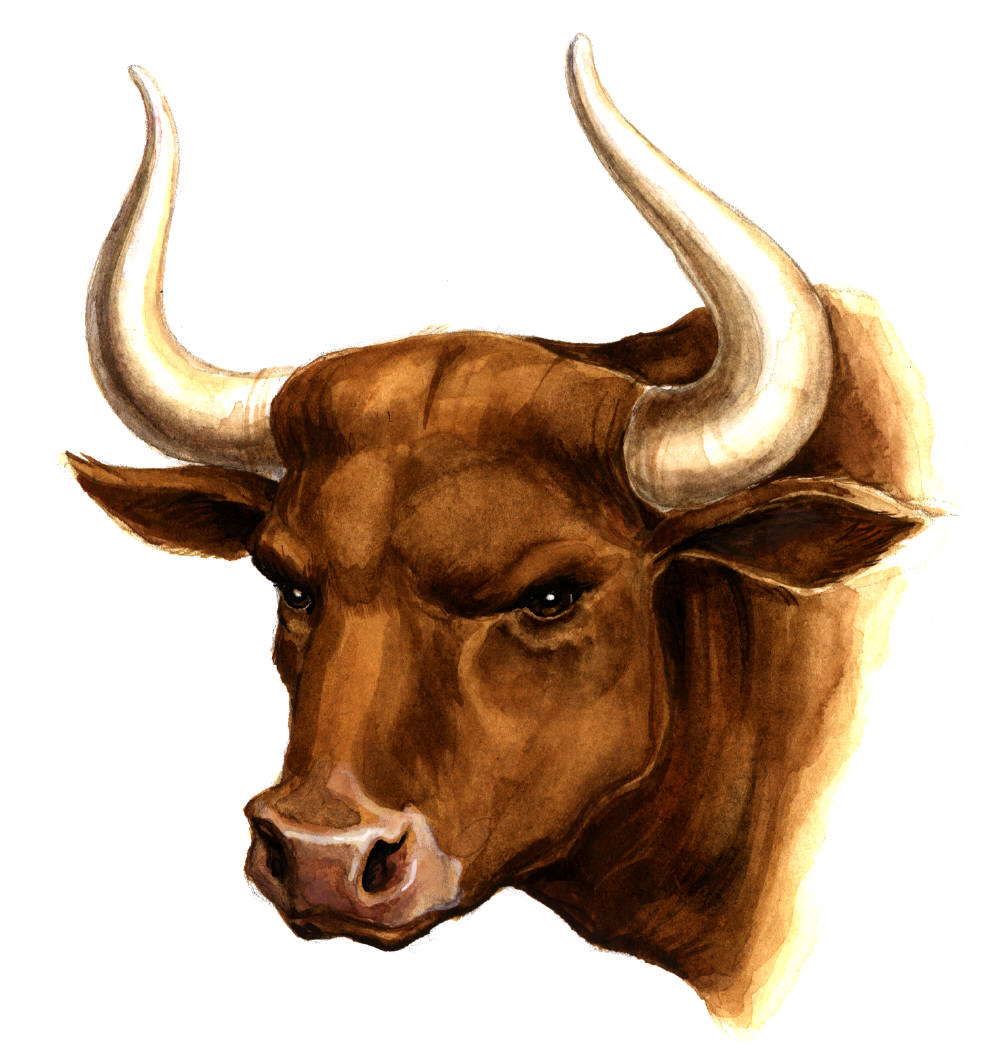 In this page you can download image texture or background - clipart, picture, head bull with , download photo, desktop wallpapers.