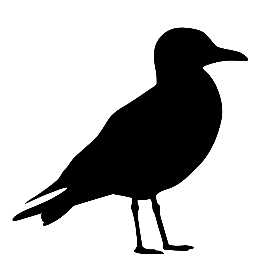 Clipart Seagull - ClipArt Best
