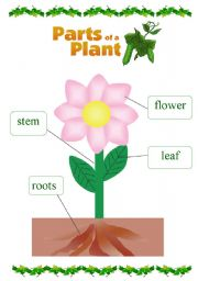 math worksheet : parts of a plant worksheets  clipart best : Parts Of A Plant Worksheet Kindergarten
