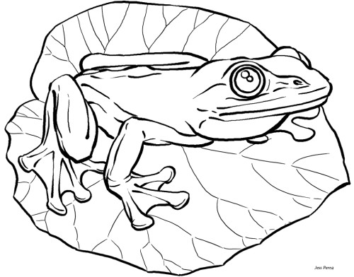 frog on lily pad coloring page . Free cliparts that you can download ...