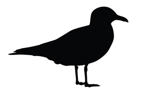 Seagull silhouette vectors – Silhouettes Vector
