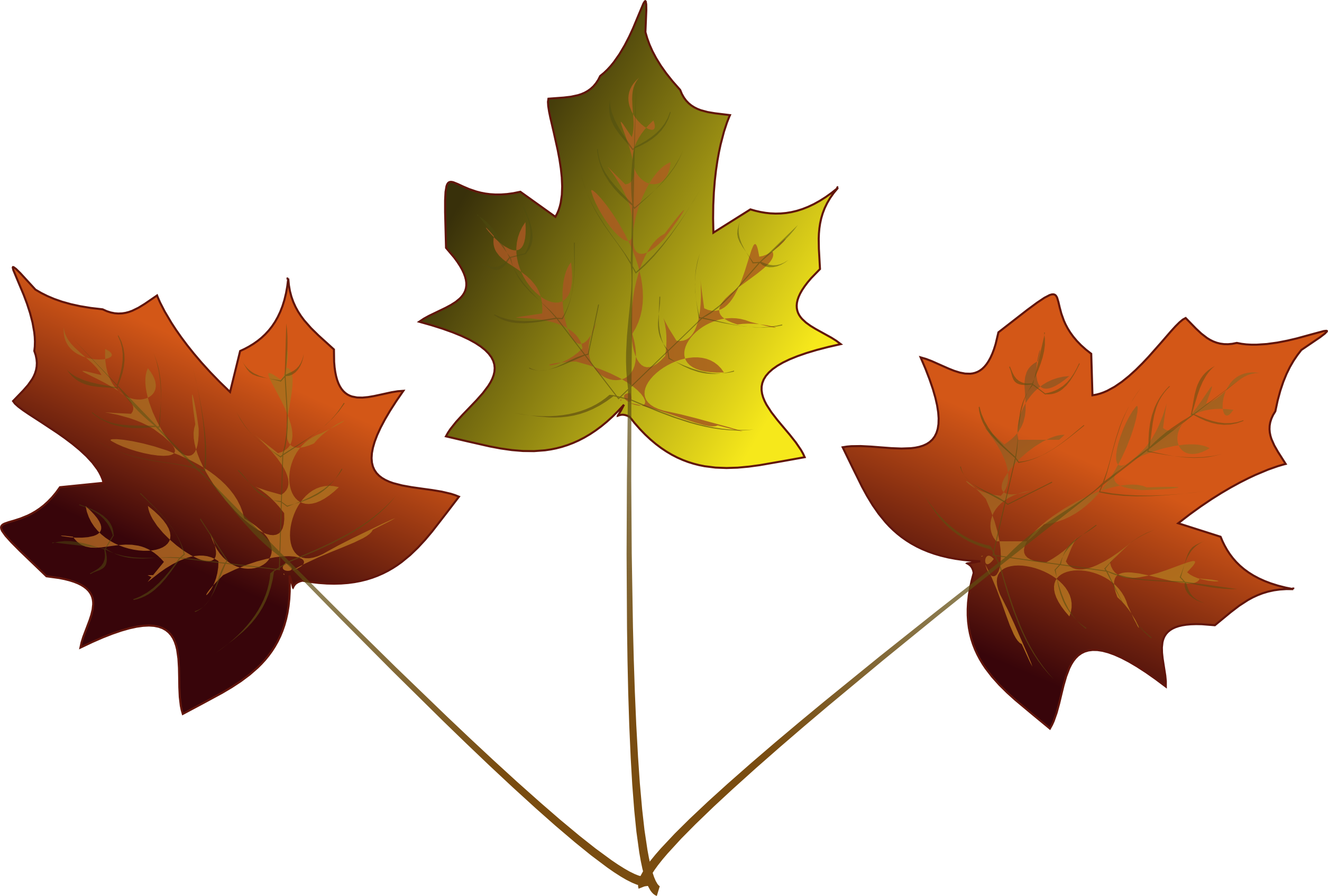 43 how to draw a maple leaf . Free cliparts that you can download to ...