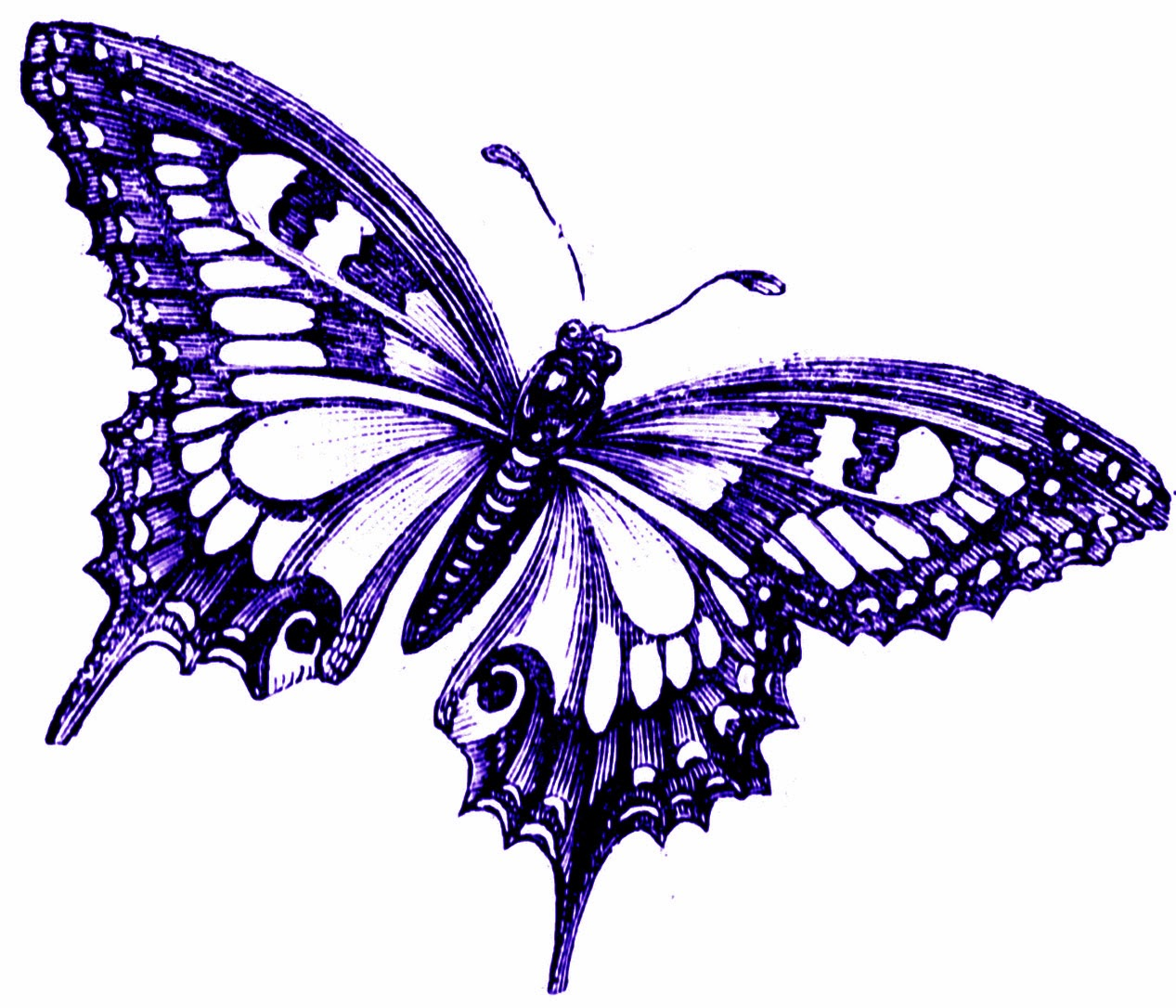 Purple Butterfly Clipart - ClipArt Best