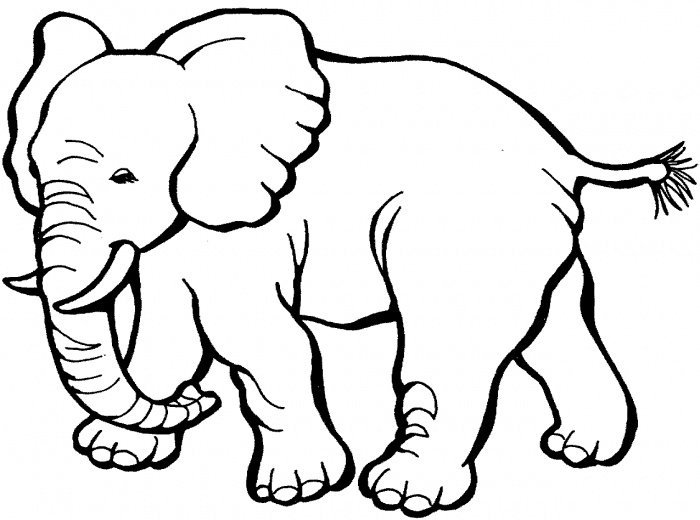 Amazoncom Creative Coloring Animals Art Activity Pages