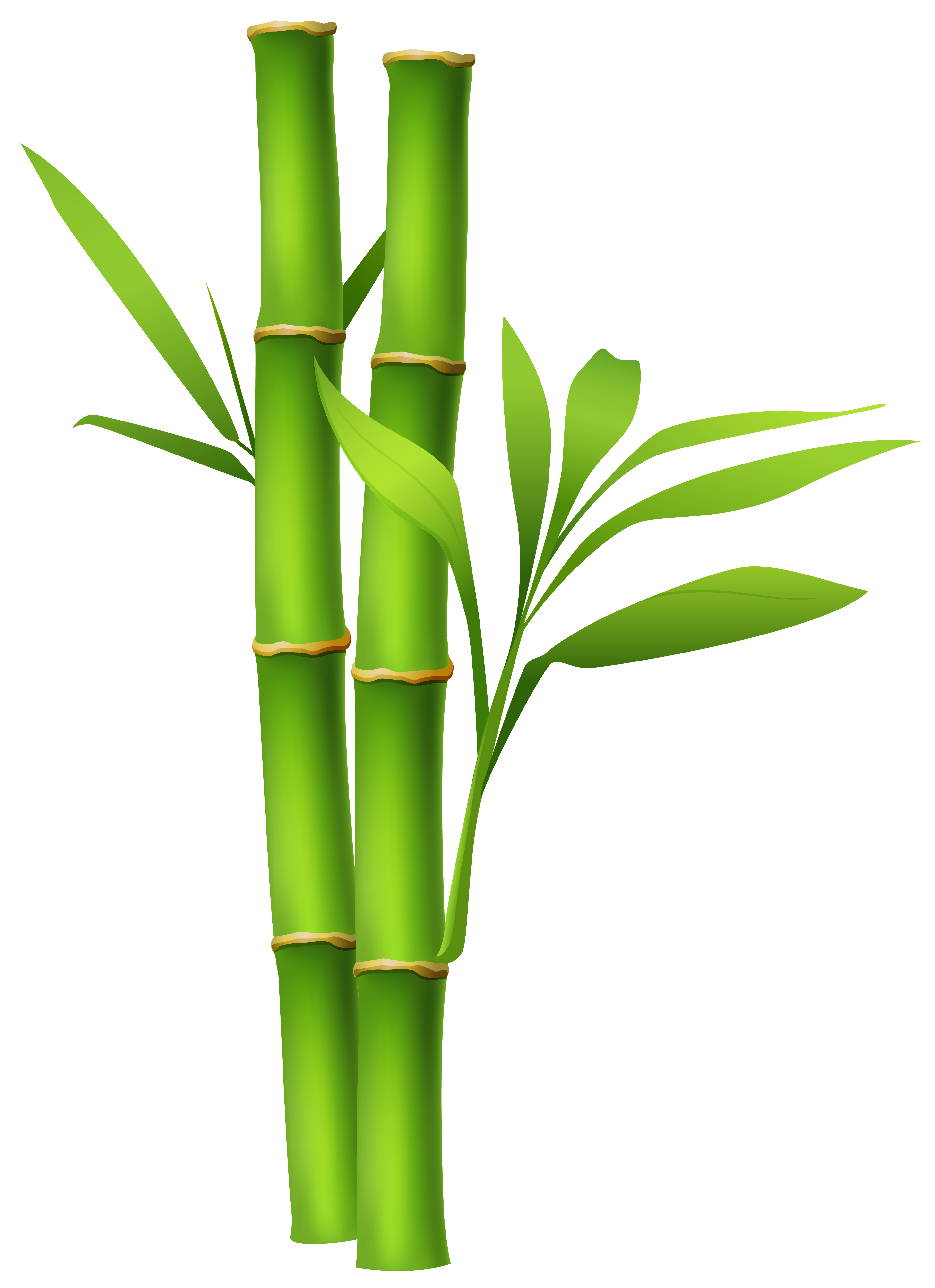 28 bamboo border free download free cliparts that you can download to ...
