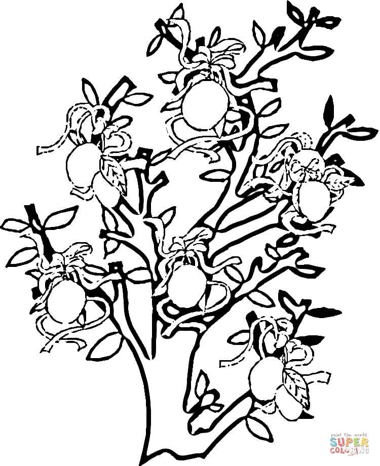 Fruit Tree Coloring ClipArt Best