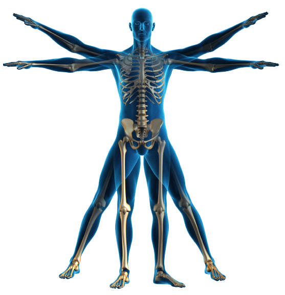 the effects of physical exercise on the human body