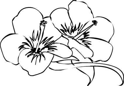 Hibiscus Flower Drawing - ClipArt Best