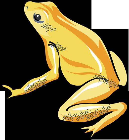 Frogs Art - ClipArt Best