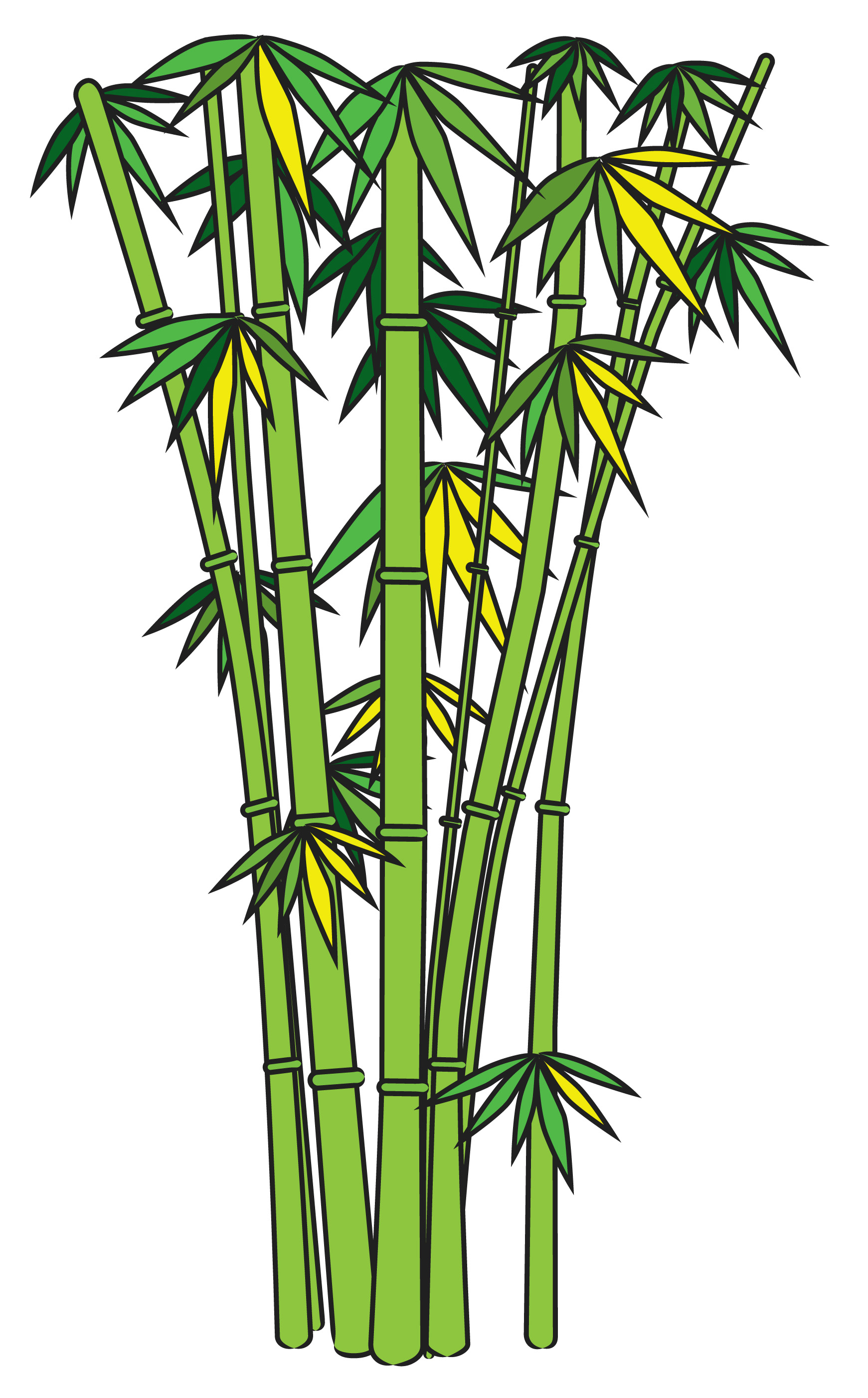 Bamboo tree png clipart best