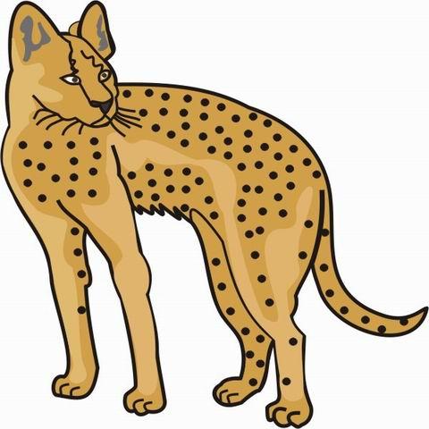 Cartoon Cheetahs ClipArt Best