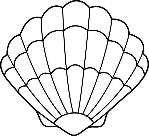 Shell Drawing Art Clipart Best