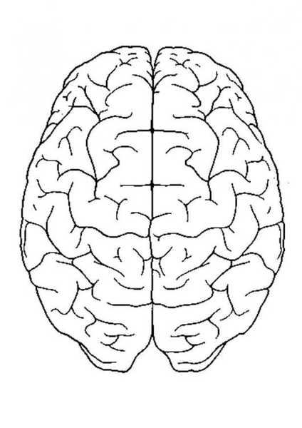 outline of a brain clipart best