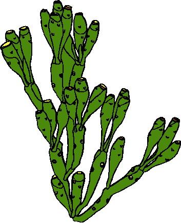 Cactus With Christmas Lights