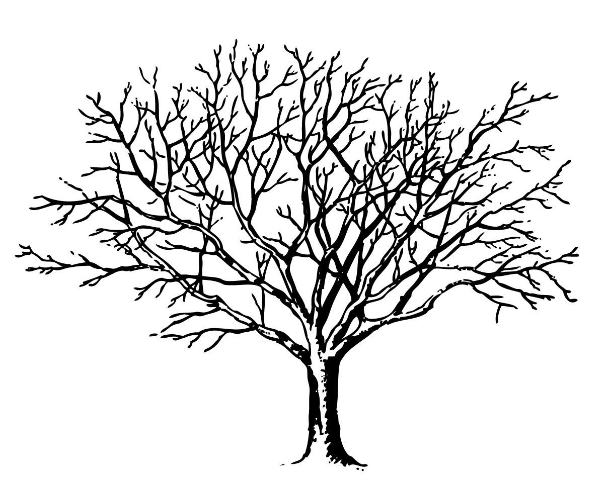Line Art Of Trees : Tree line drawings clipart best