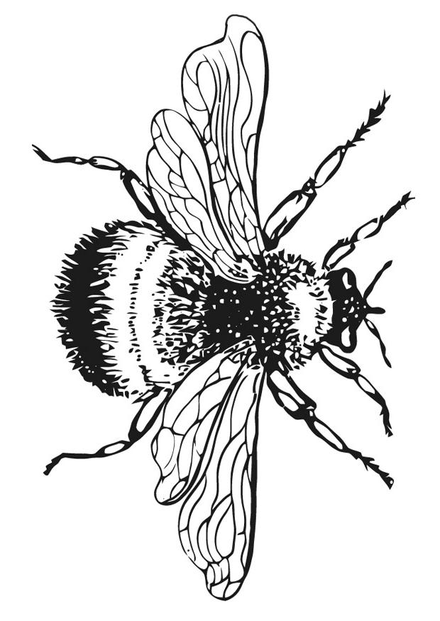 Line Art Bee : Bumble bee drawing clipart best