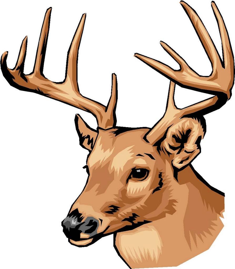 roe deer drawing for kids, roe deer drawing for kids wallpaper ...