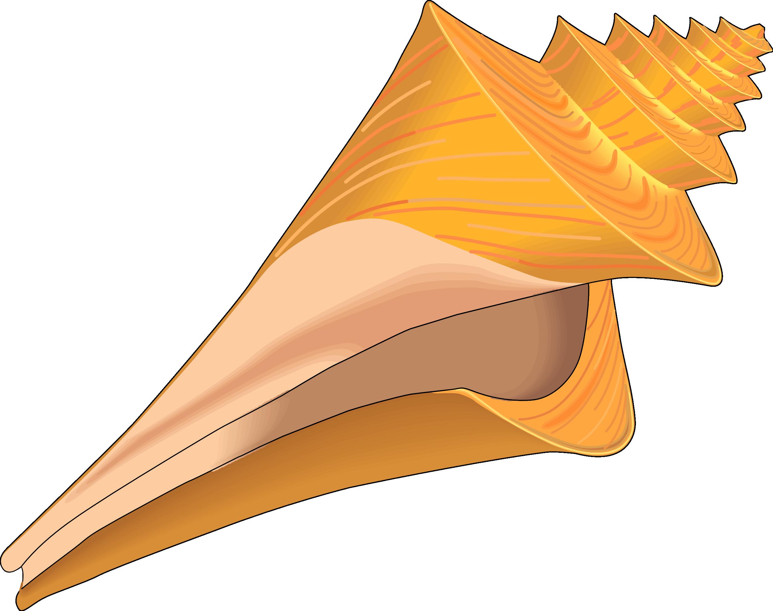 Clip Art Seashells Clipart seashells clip art clipart best sea shells tumundografico