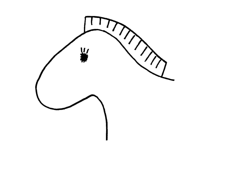 Horse Head Template Clipart Best Clipart Best Clipart Best