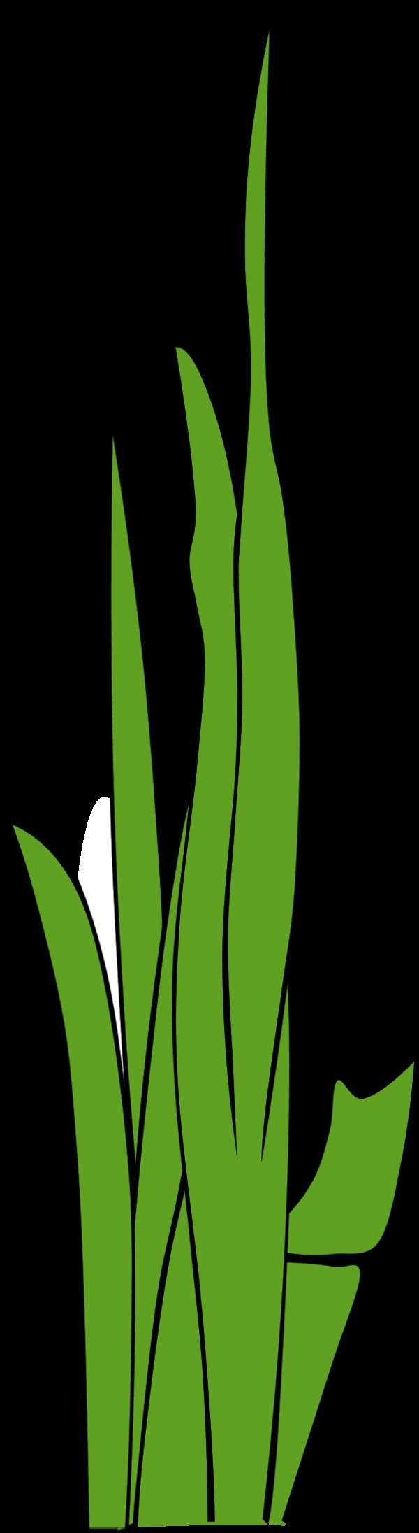 blade of grass vector - photo #4