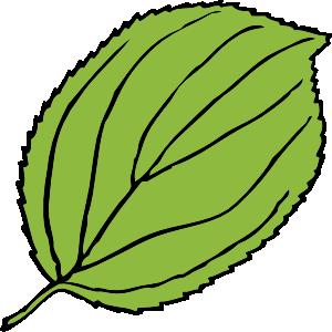 Serrate Leaf clip art - vector clip art online, royalty free ...