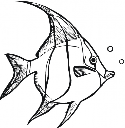 coloring pages and tropical fish - photo#23