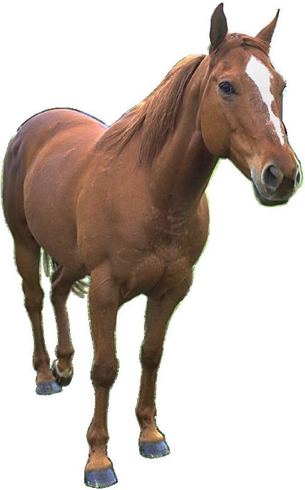 Image Of A Horse - ClipArt Best