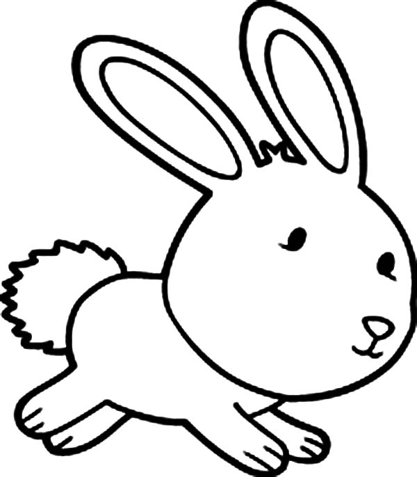 Cartoon Rabbit Pages Coloring Pages