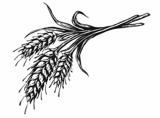 wheat images black and white images clipart best