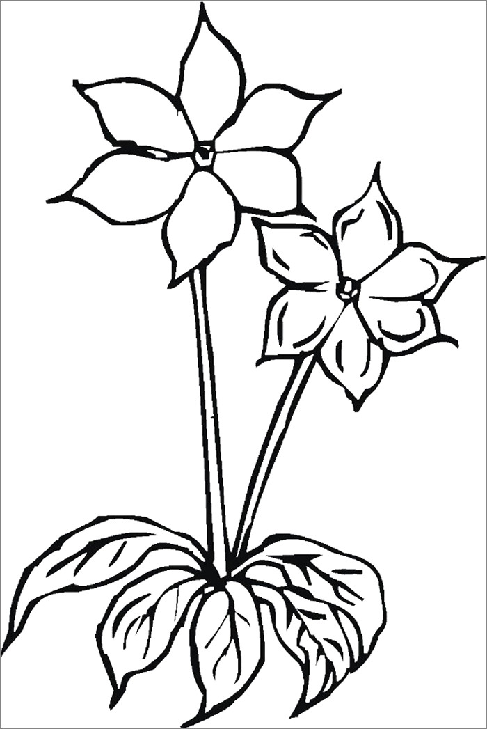 Blank flower coloring pages coloring pages for Blank flower coloring pages