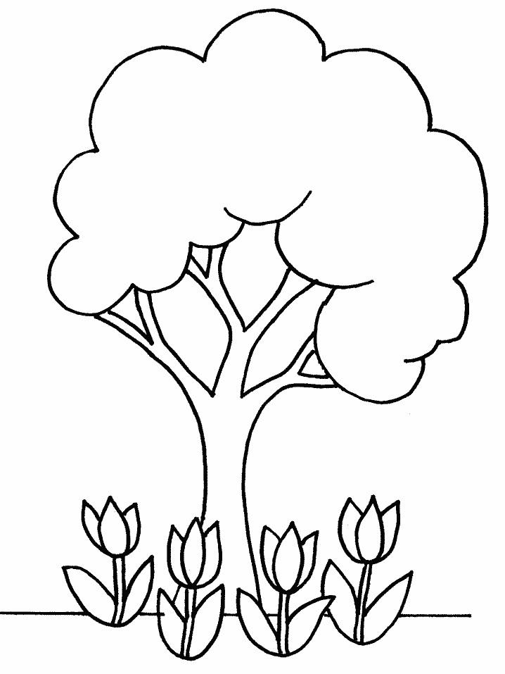 oak tree coloring pages - oak tree coloring page clipart best