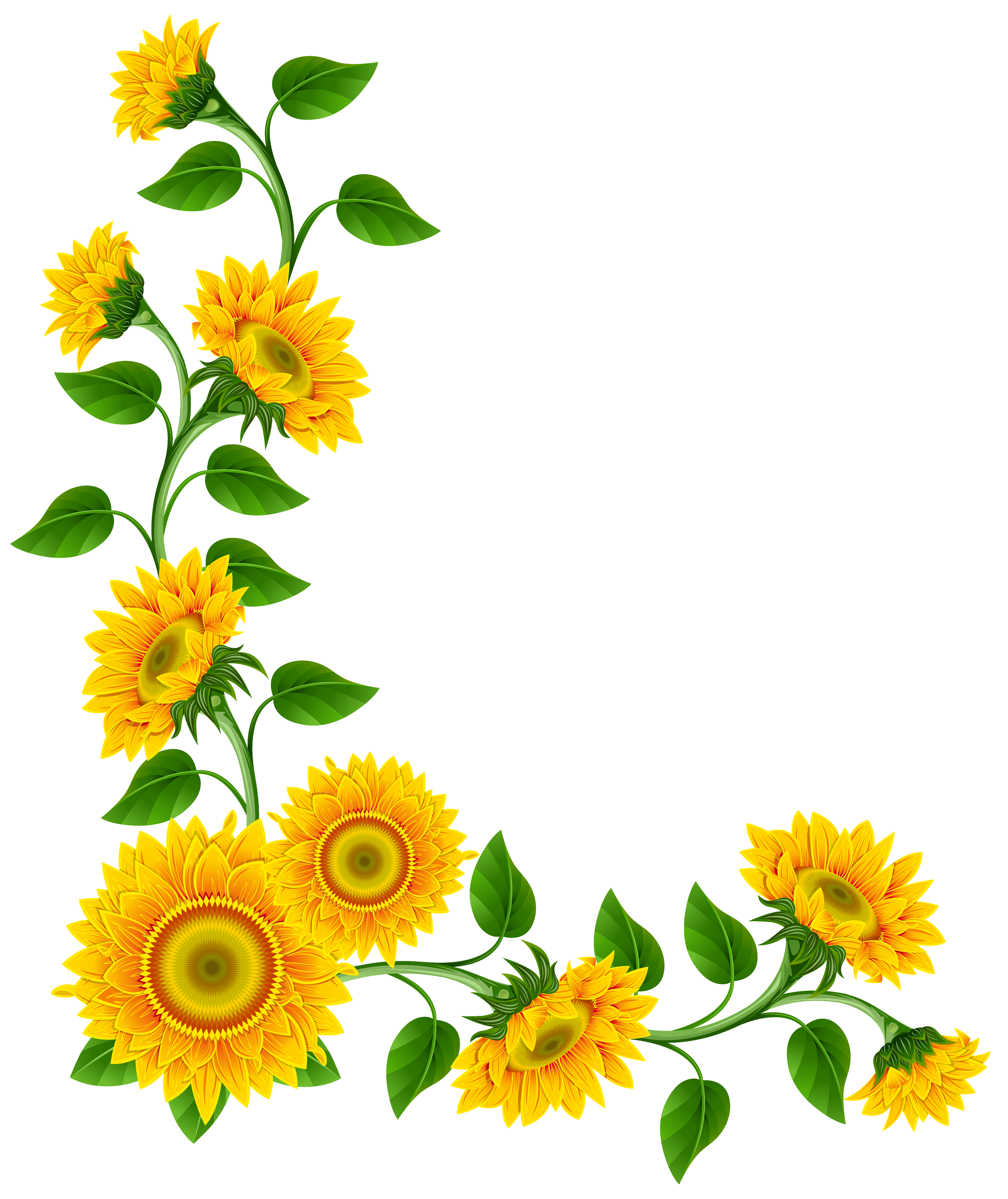 Sunflower Border - ClipArt Best