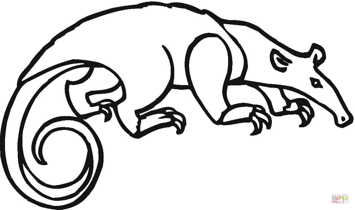 Anteater Drawing ClipArt Best