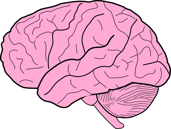 brain animation clipart best