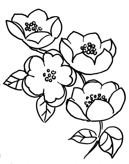 free cherry blossoms coloring pages