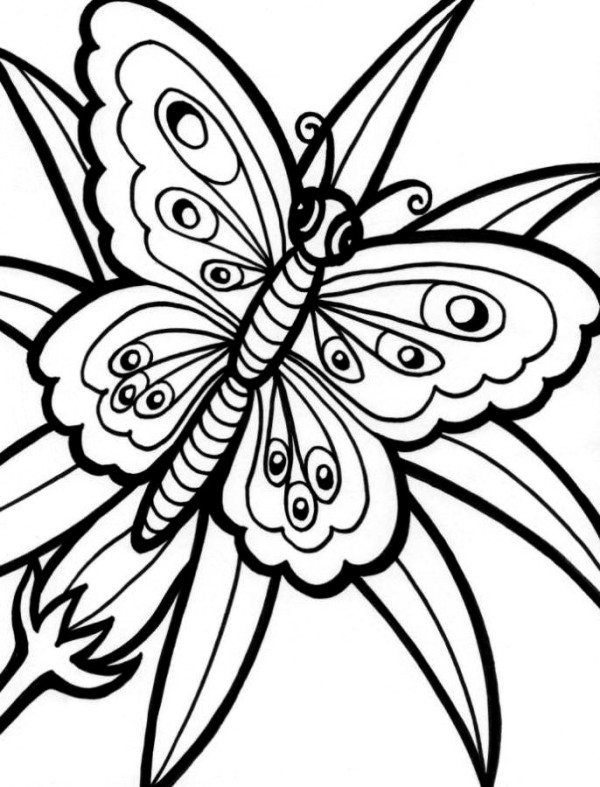 Cute Butterfly Drawings ClipArt