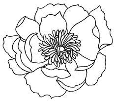 Poppy Outline Printable - ClipArt Best