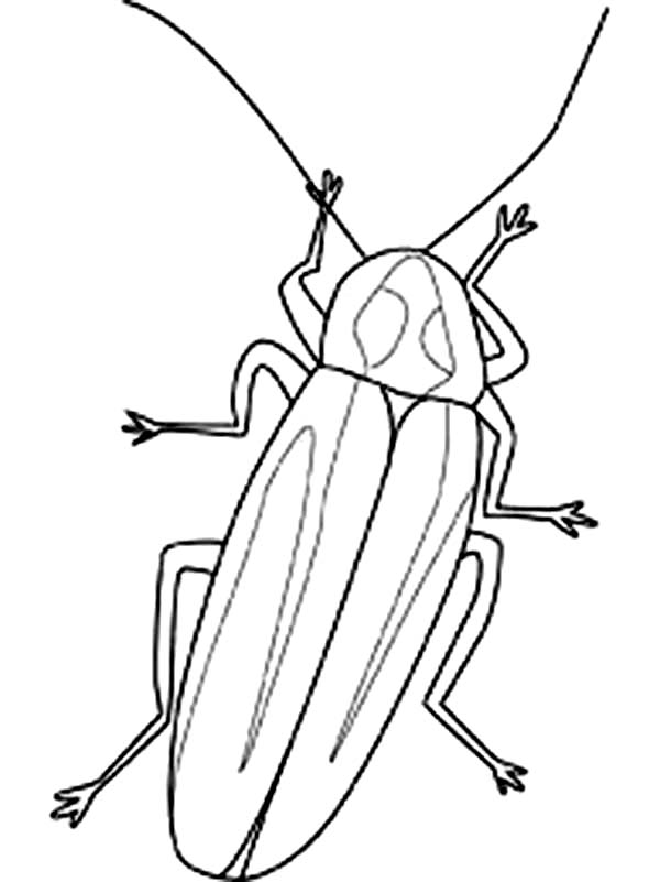 lightning bug coloring pages  clipart best, printable coloring