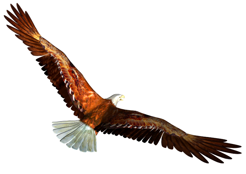 Animated Bald Eagle Pictures