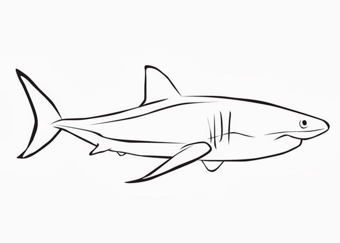 Shark Drawing Template - ClipArt Best